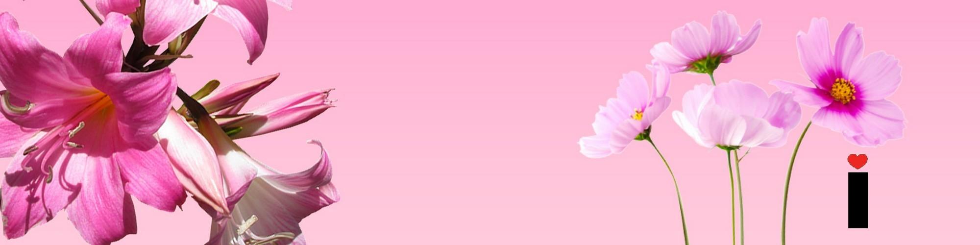 https://www.infomiks.si/wp-content/uploads/2021/01/logo4.jpg
